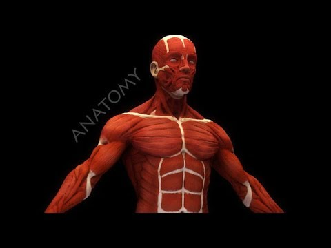 MUSCLES USED IN BASKETBALL